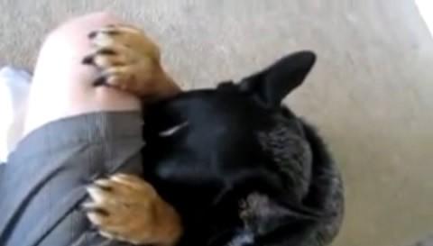 perro-reza-comer-alimentos