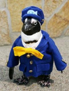 conductor-tren-pinguino-japon