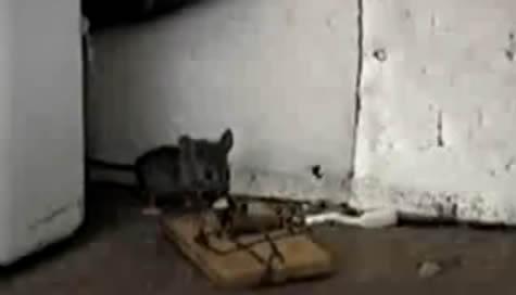 trampa-para-raton-video