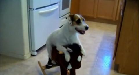 trucos-pequeno-perro-video