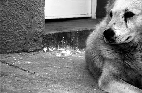 historia-perros-chocolate-callejeros