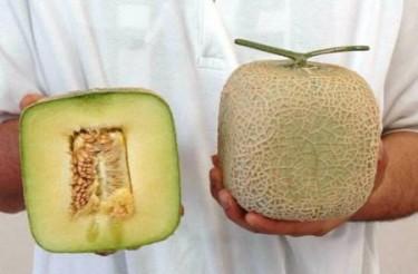 melon-cuadrado