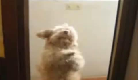 perro-bailarin-talentoso-moviendo-caderas-ritmo