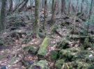aokigahara-bosque-suicidio-japon-08