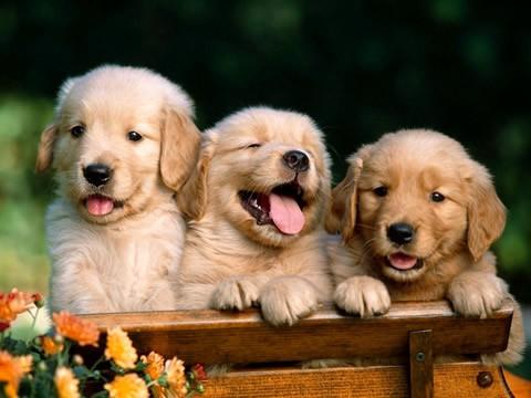 investigaciones-curiosas-comer-perros