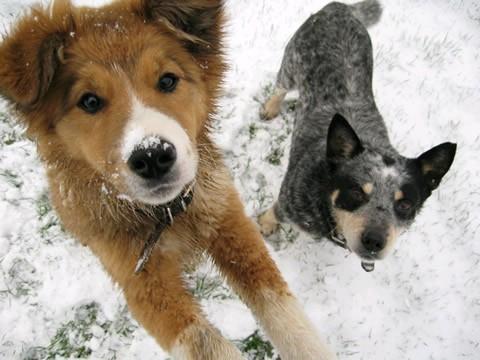 investigaciones-curiosas-perros-rompehielos