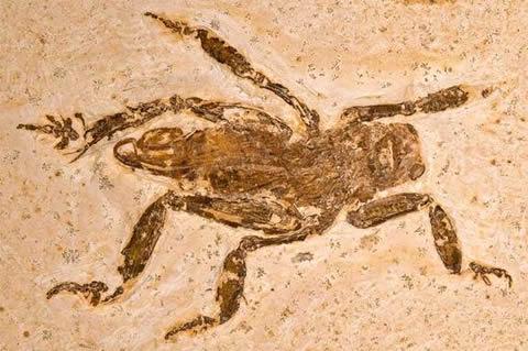 resto-fosilizado-insecto-carnivoro