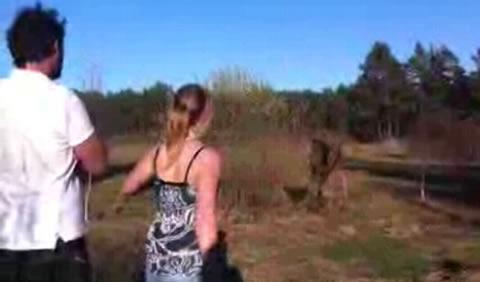 hombre-alce-enfrentamiento-video
