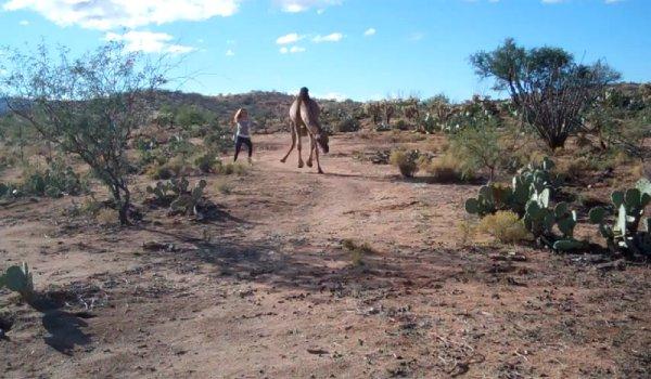 Chica contra camello