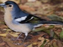 Confunden un pájaro con un espía
