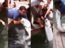 Un turista casi pierde un brazo dándole de comer a un pez
