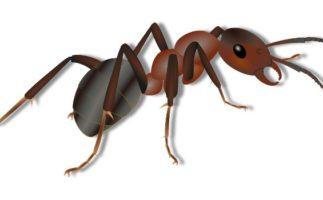 Así sobreviven los insectos durante el invierno