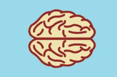 El azúcar, peligrosa para tu cerebro