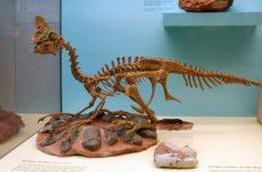 Trabajadores encuentran huevos de dinosaurio en China