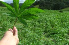 Según un estudio, la marihuana ayuda a crear recuerdos falsos