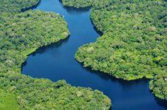 Cuántos árboles hay en el Amazonas