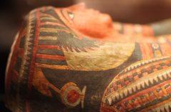 Comprobado: la mayoría de las momias animales están vacías