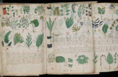 El manuscrito Voynich, el libro más difícil de leer
