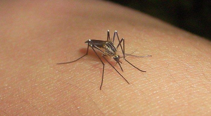 Dengue: qué es y cómo se transmite
