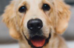 Perros contra gatos: ¿qué mascota nos quiere más?