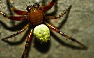 ¿Las arañas te parece grandes? Eso es porque tienes miedo