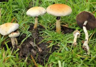 Los hongos podrían ser la solución a la depresión