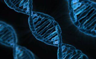 Genes que se despiertan cuando morimos