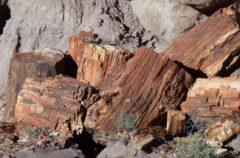 Las piedras petrificadas del Bosque Petrificado de Arizona ¿están malditas?