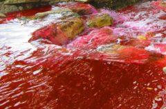 Parecido a una plaga bíblica: el río Daldykan se vuelve de color rojo