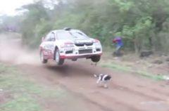 Un piloto hace volar su coche… Para salvar a un perro