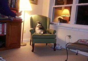 Este gato es el más gordo del mundo, y vive en un hotel