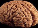 Olvidar los recuerdos es, científicamente, una buena idea