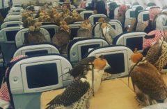 Un multimillonario suadí compra 80 asientos de avión… Para sus halcones