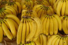 El plátano, una fruta algo radioactiva
