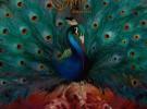 Opeth, toda la información sobre Sorceress, su nuevo disco