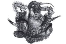 'Kraken' de Locus – El ser vivo tras el monstruo