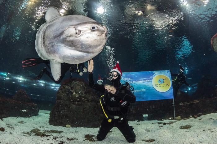 coma y tiburones