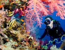 Excursiones de buceo y otros deportes