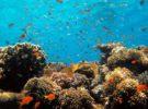 Submarinismo en Eilat