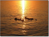 Relax en el Mar Muerto