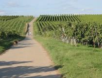 Recorre la Ruta del vino alemán