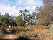 El Impenetrable en Chaco