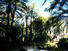 Palmeral de Elche, el más grande de Europa