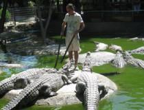 Conoce los cocodrilos muy de cerca en Cocodrilo Park