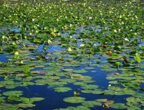 Esteros del Iberá en Corrientes