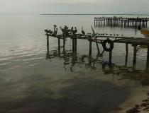 Isla Aguada (II)