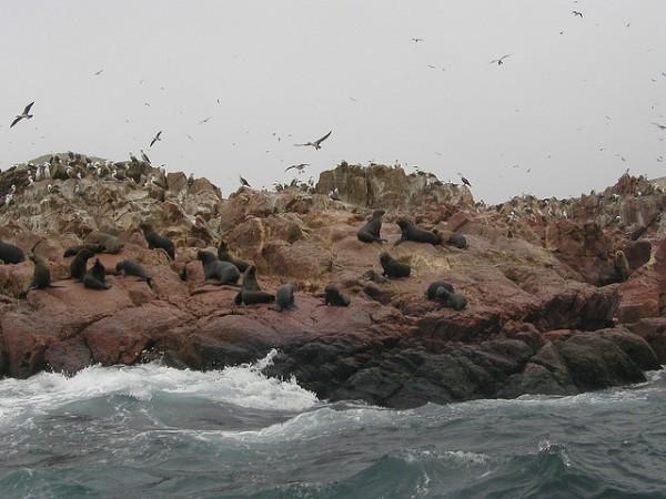 Fauna en las islas Ballestas