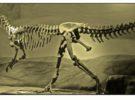 Dinosaurios, ballenas y pingüinos en Trelew