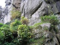 El Bosque Teutónico