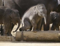 El Parque Zoológico de Hannover